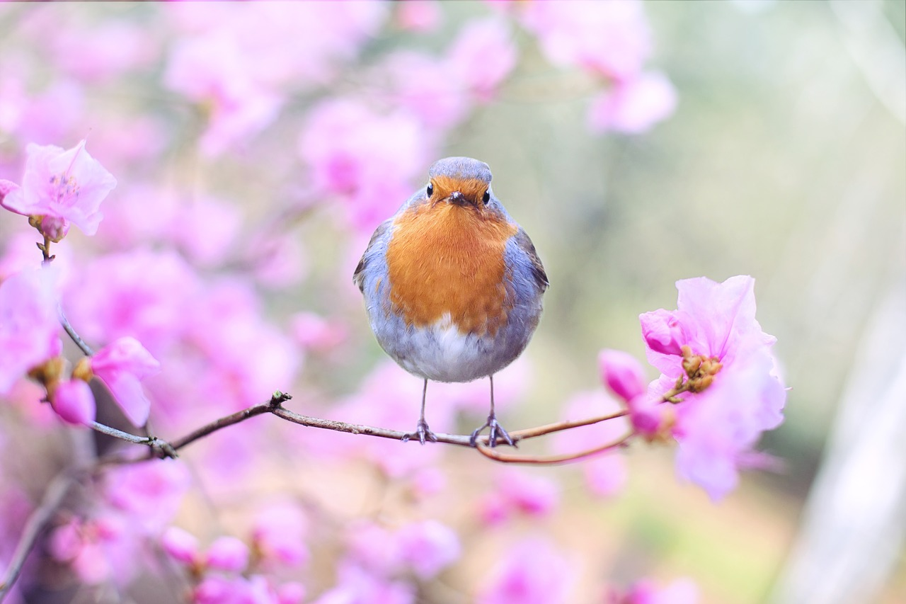 3月~4月のご予約状況、面談場所の花